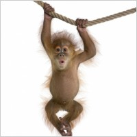cute_monkey_definition_picture_168873
